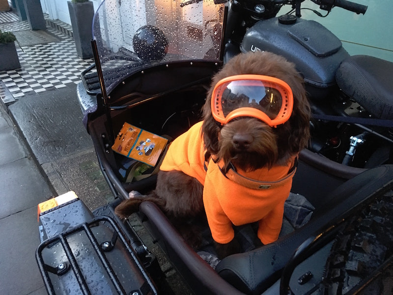 dog wearing goggles on motorcycle